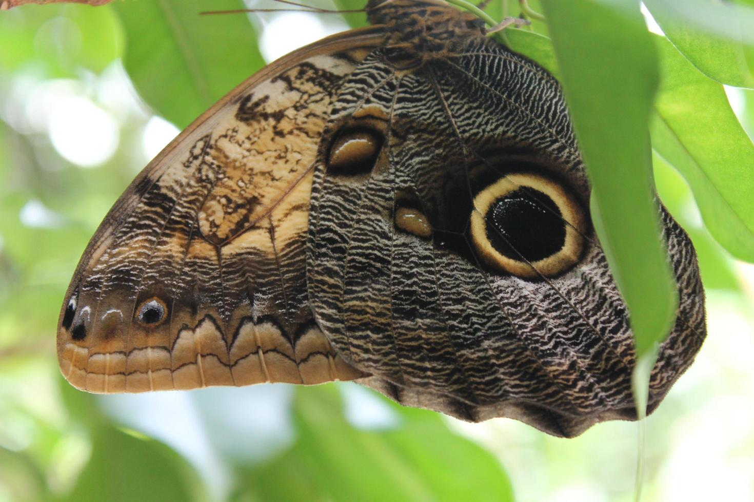 Close up of butterfly wings photo