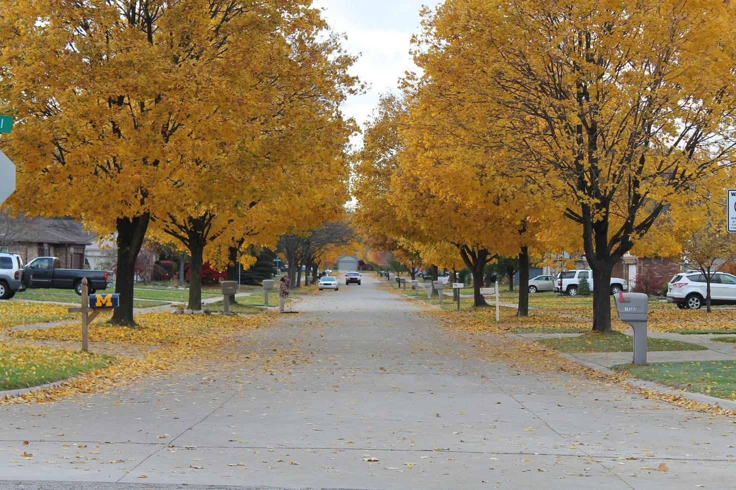 Fall leaves on the trees photo