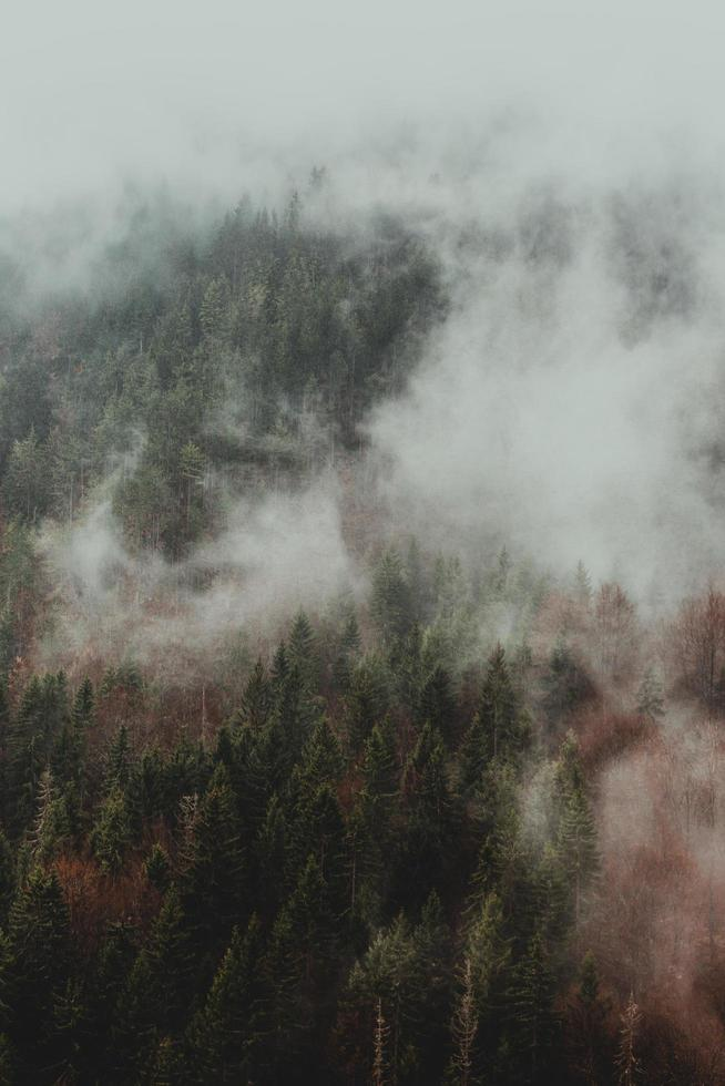 Green trees covered with fog photo