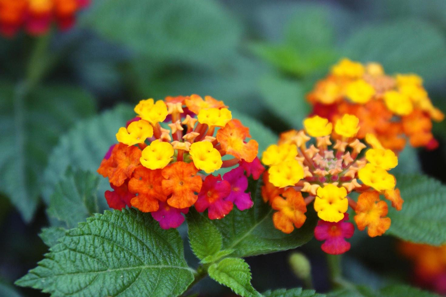 Close-up of tropical flowers photo