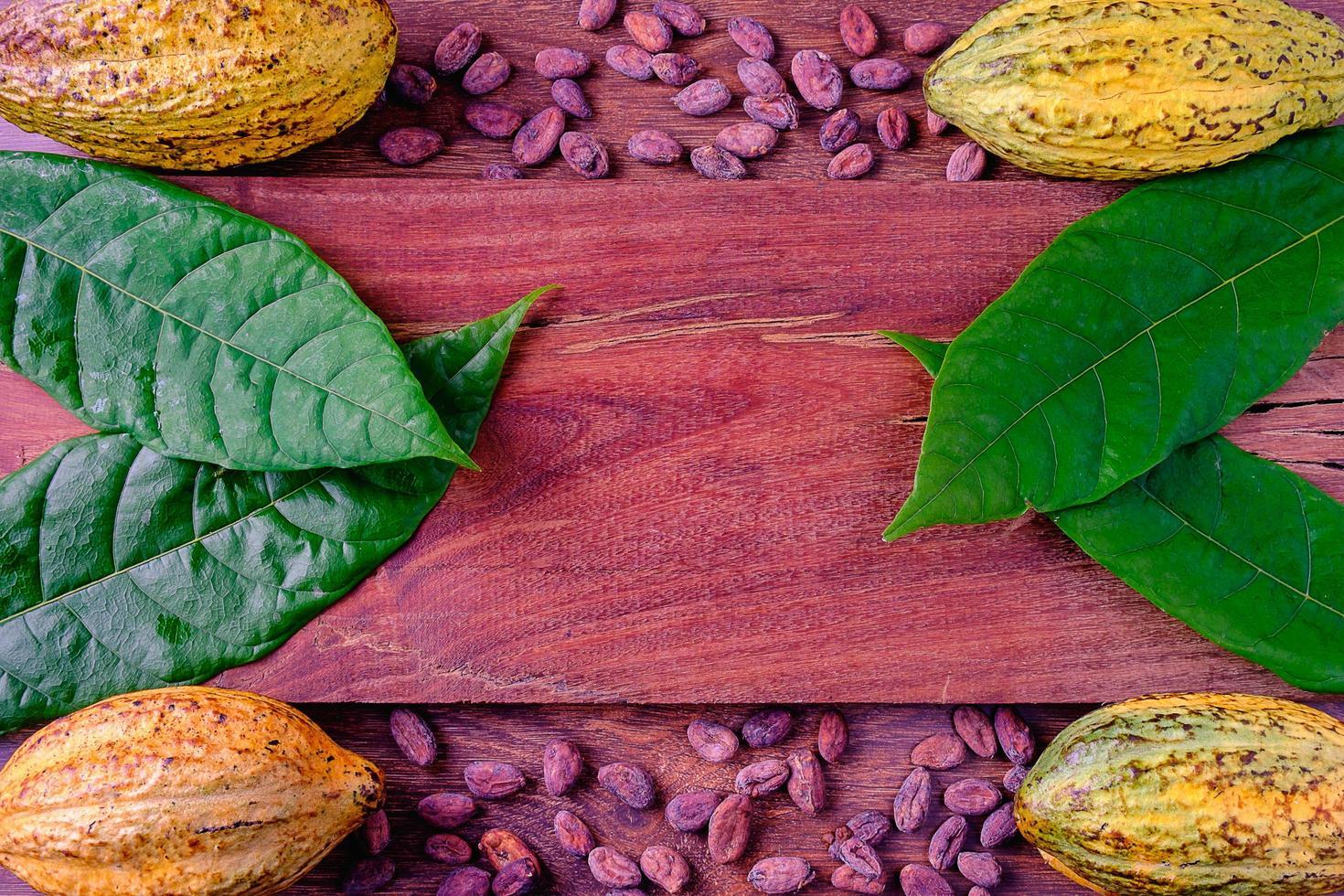 Fresh cacao beans photo