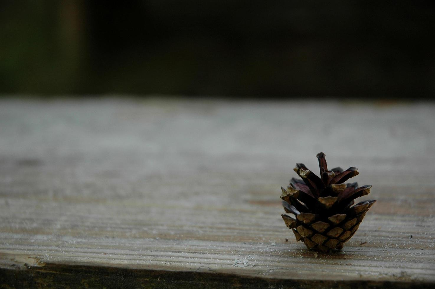 Natural brown pinecone photo