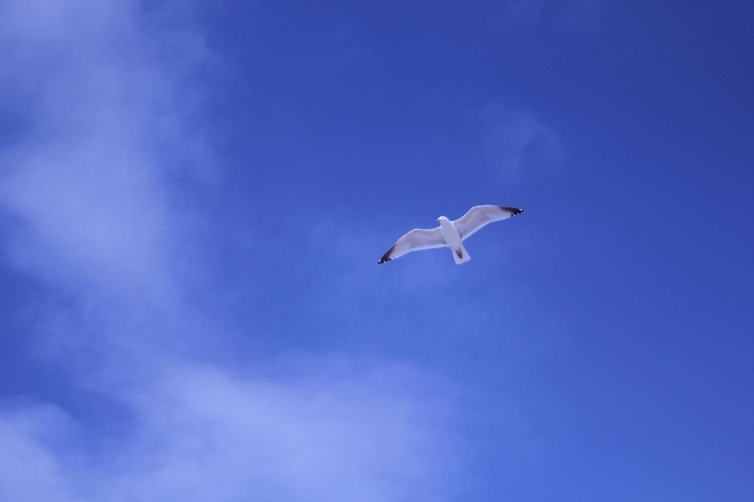 Bird flying against blue sky photo