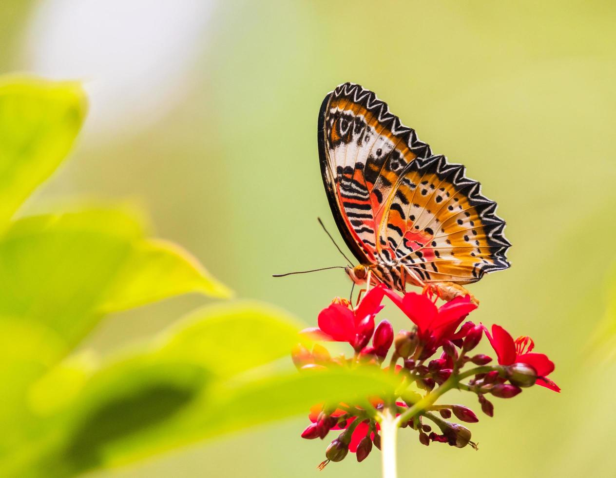 beautiful-butterfly-and-flowers-free-photo.jpg