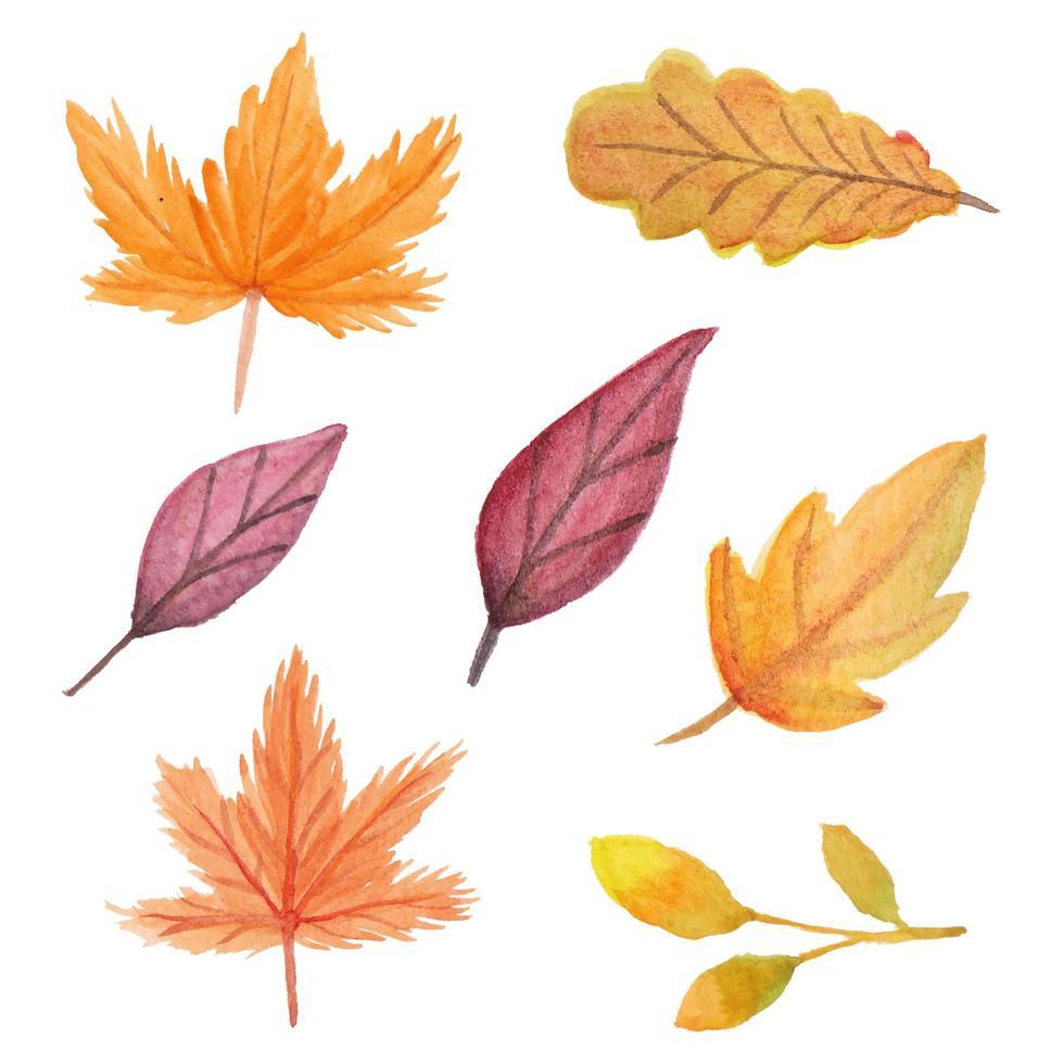 ensemble aquarelle de feuilles dautomne peint à la main vecteur