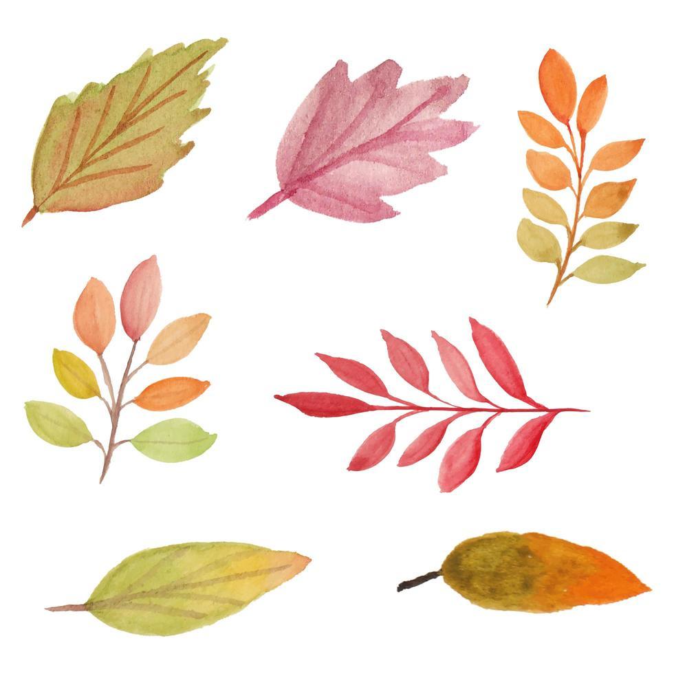 Aquarell Herbstblatt Packung vektor