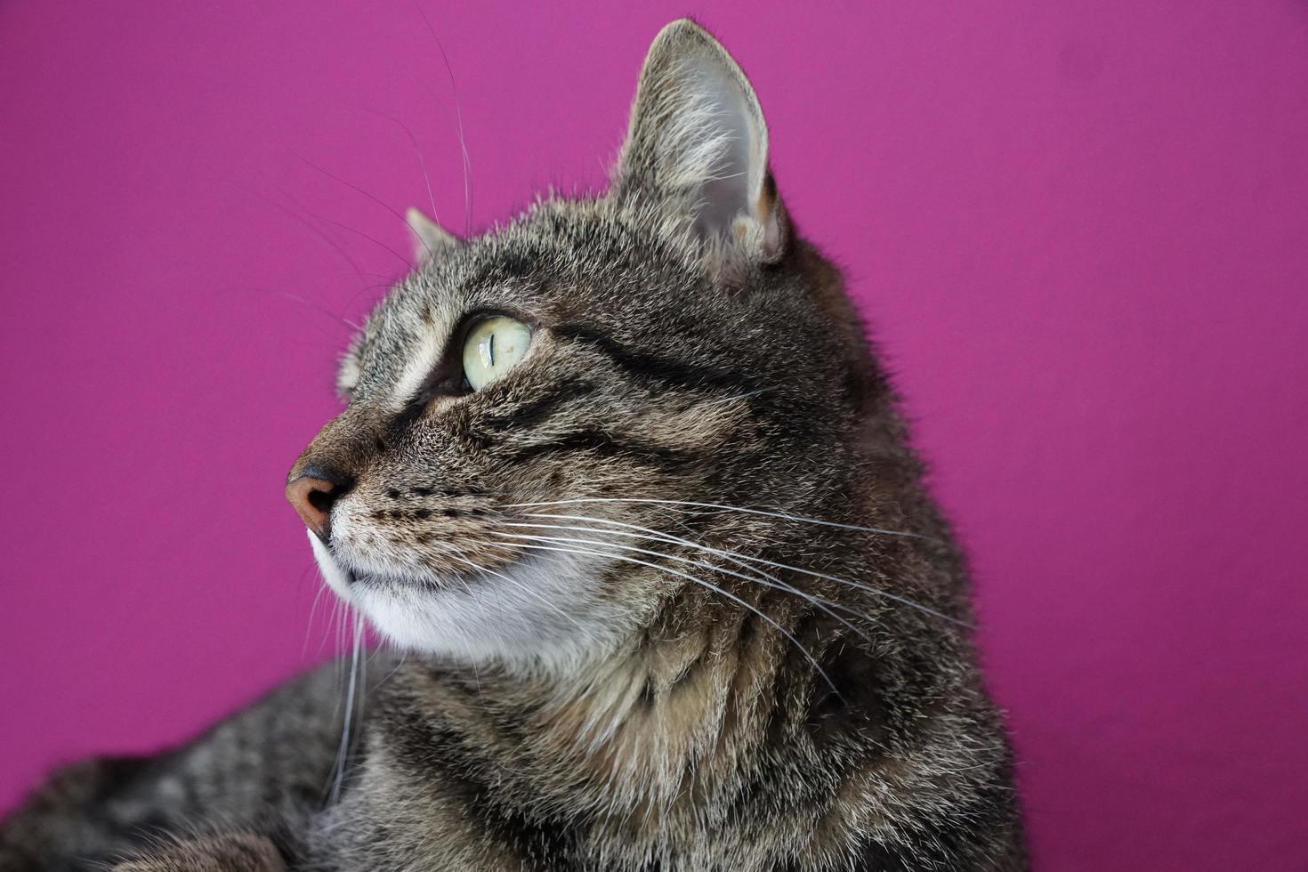 Portrait of a house cat photo