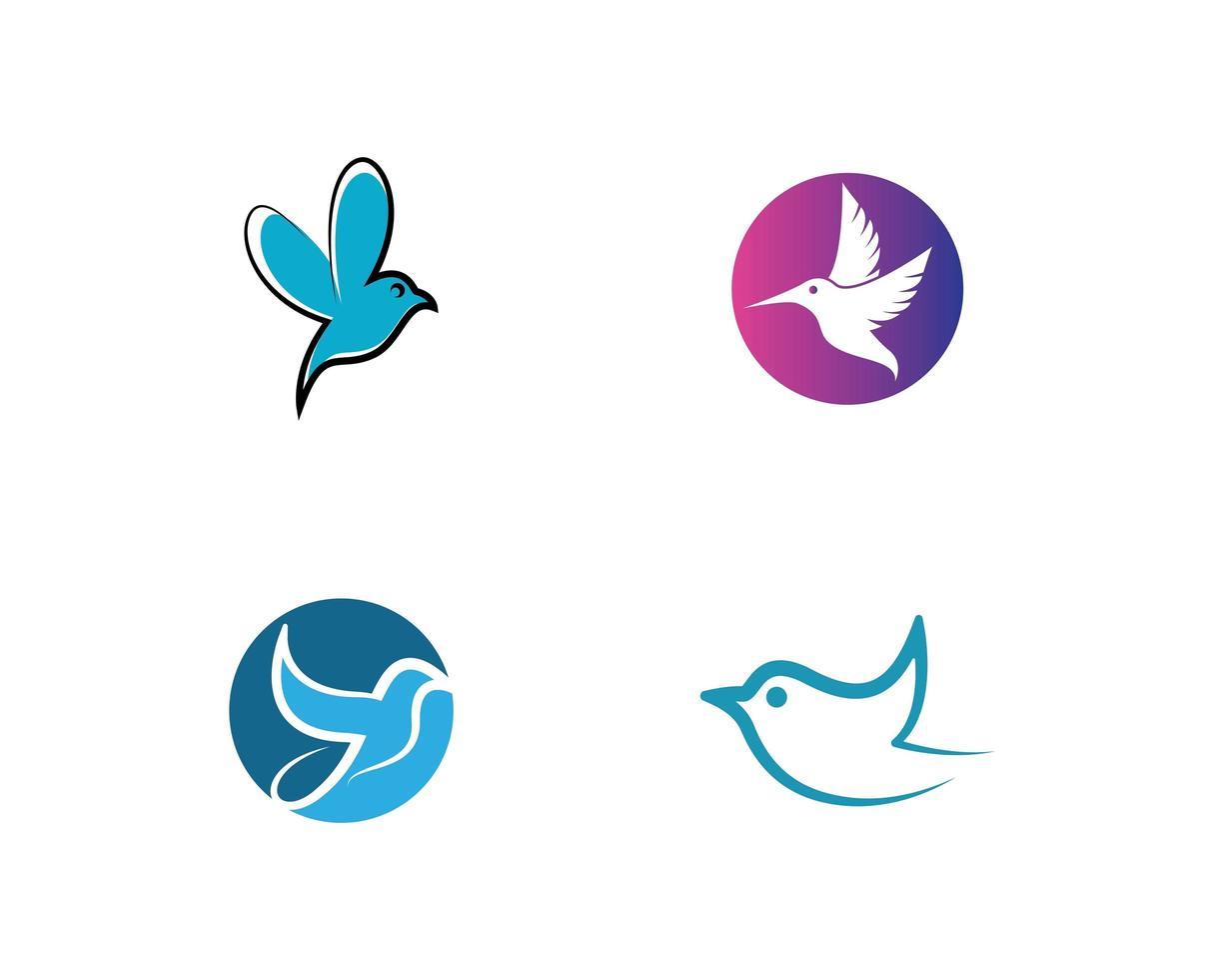 Hummingbird logo template  vector