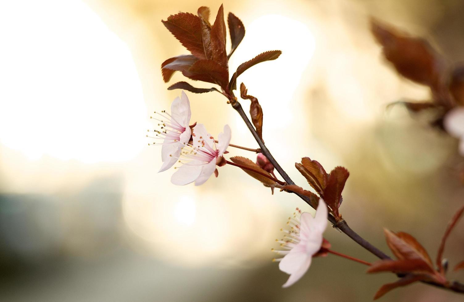 Pastel wildflower in nature photo