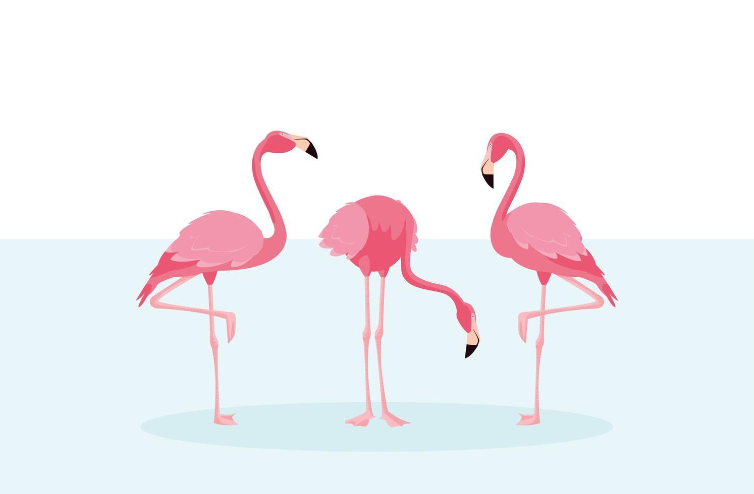 hermosos flamencos pájaros bandada de pie vector