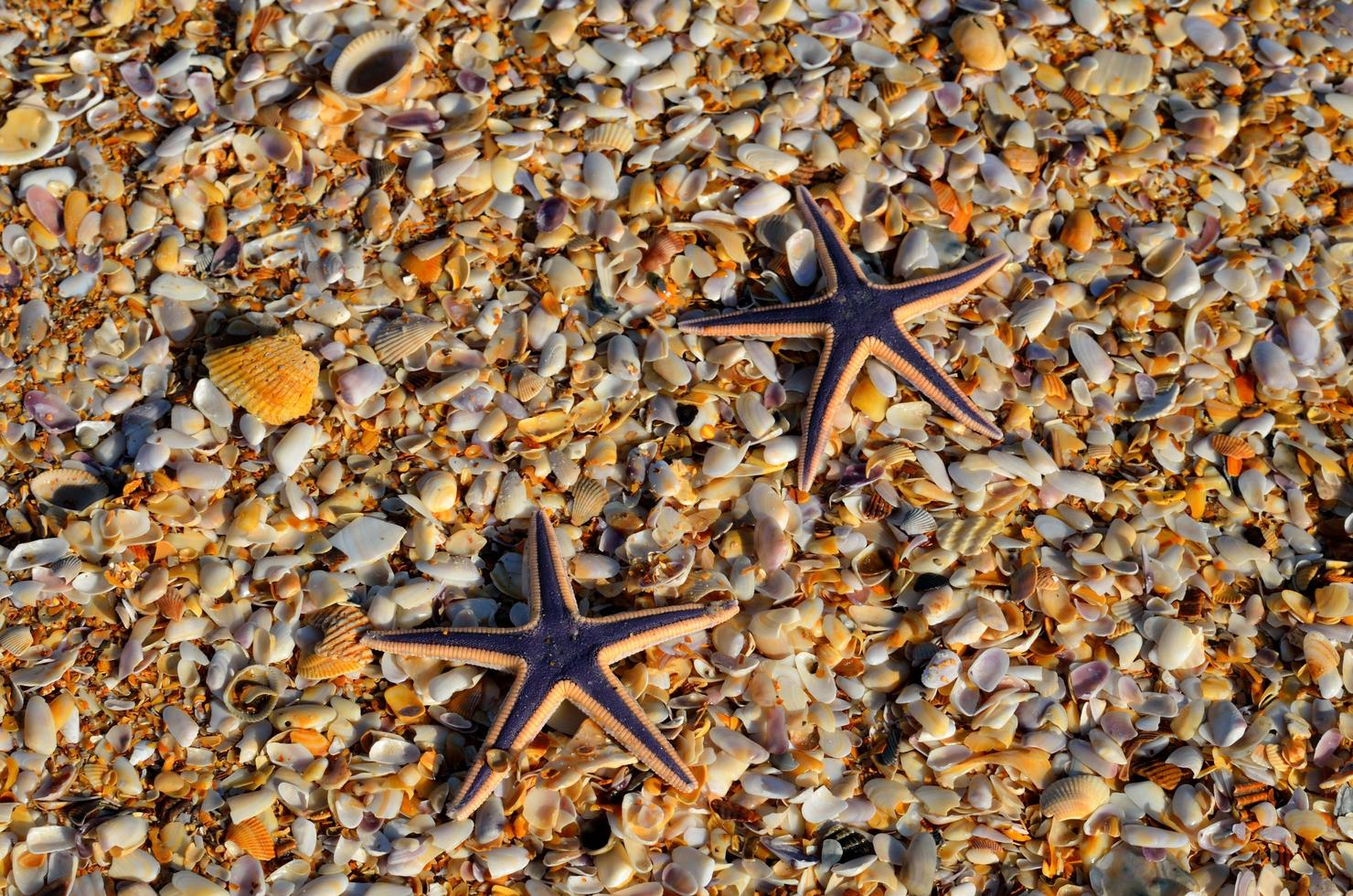 Starfishes on the pebbles photo