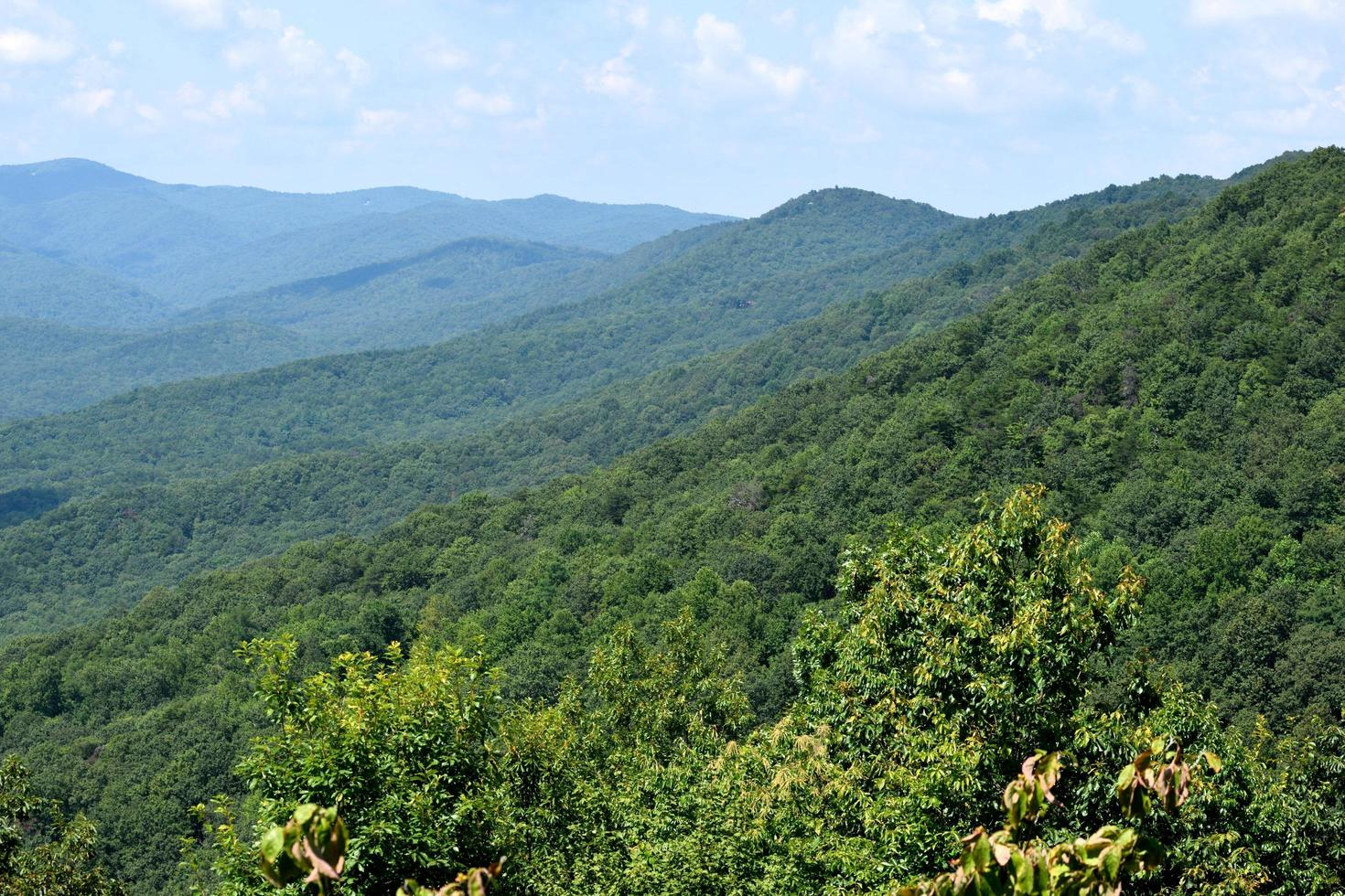 Forest on the Appalachian mountains photo