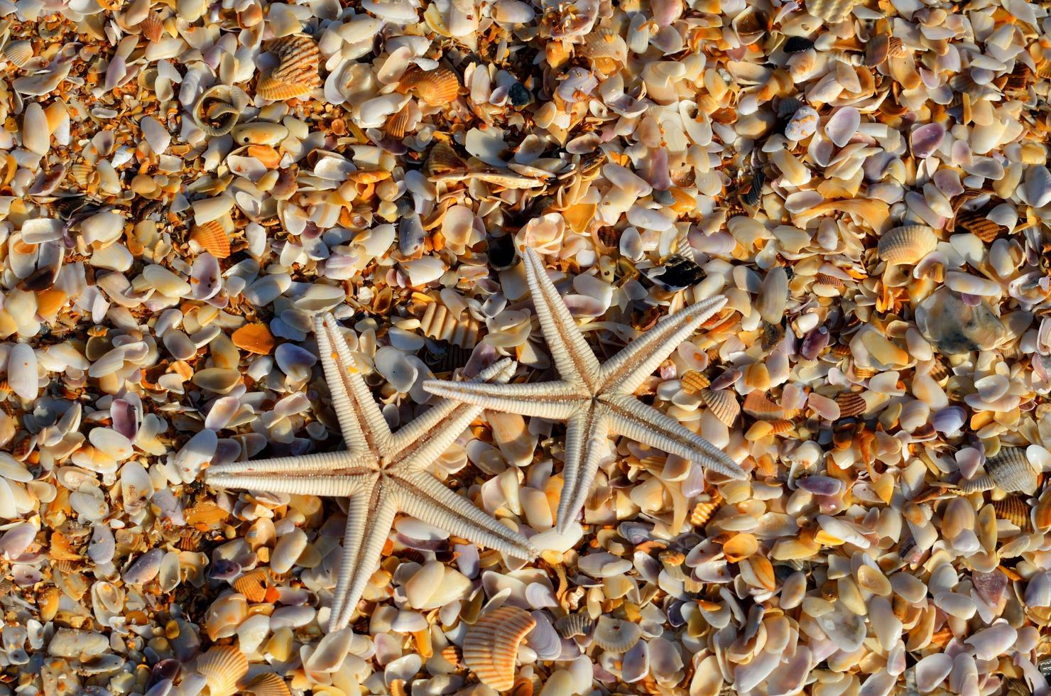 Starfishes on the beach photo