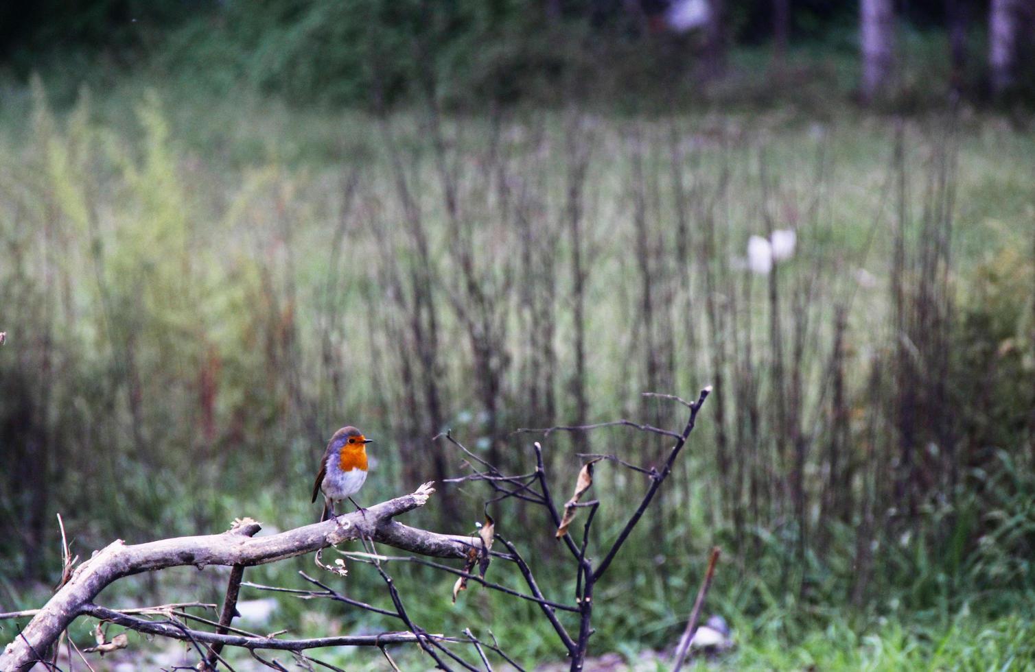 oiseau posé sur une branche d'arbre photo