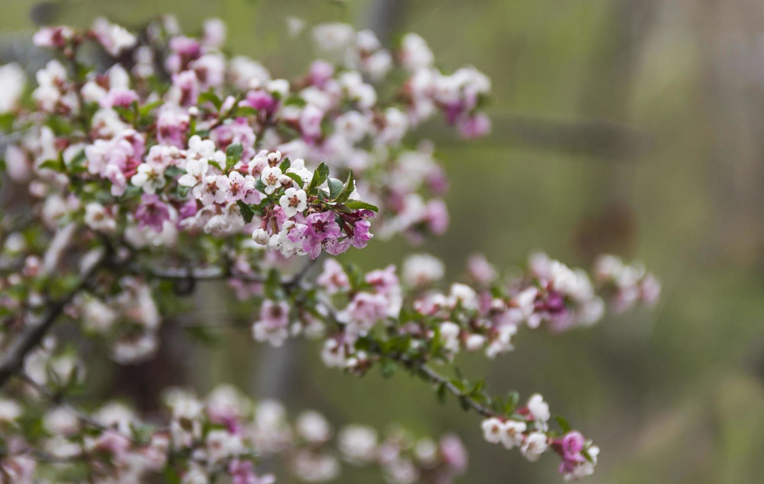 Blossom in spring season photo