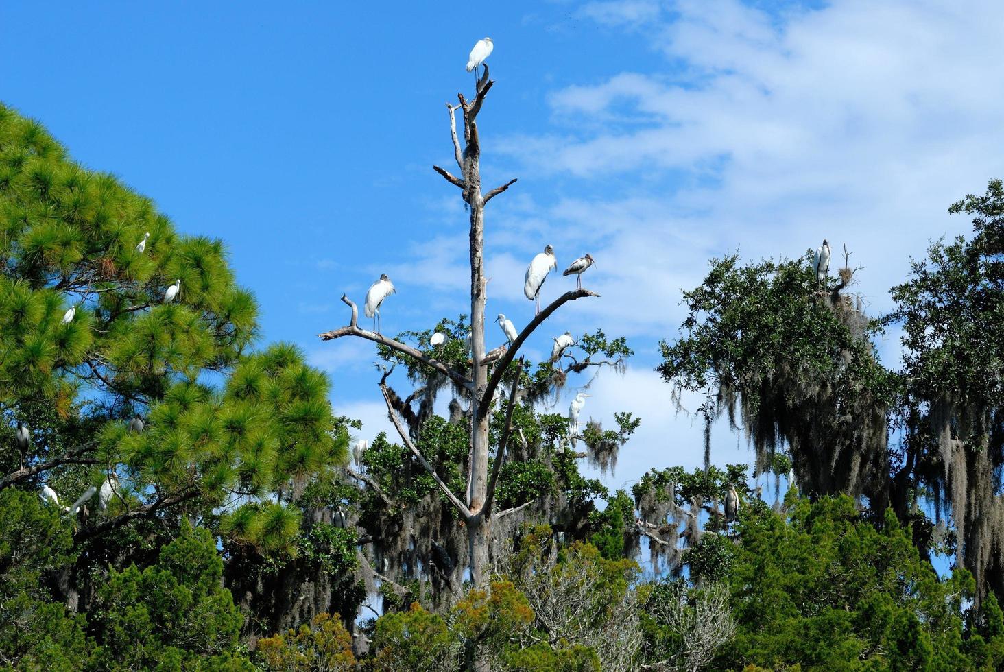 oiseaux tropicaux sur un arbre photo