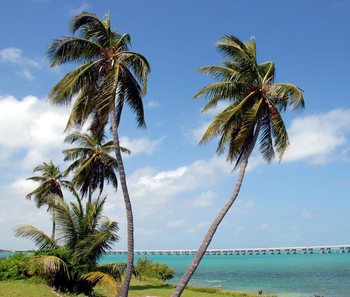 Palm trees in the Bahia Honda State Park in Florida photo