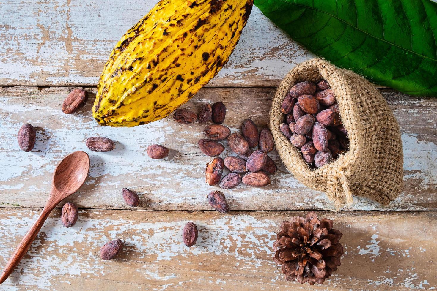 Cocoa pod and cocoa beans photo