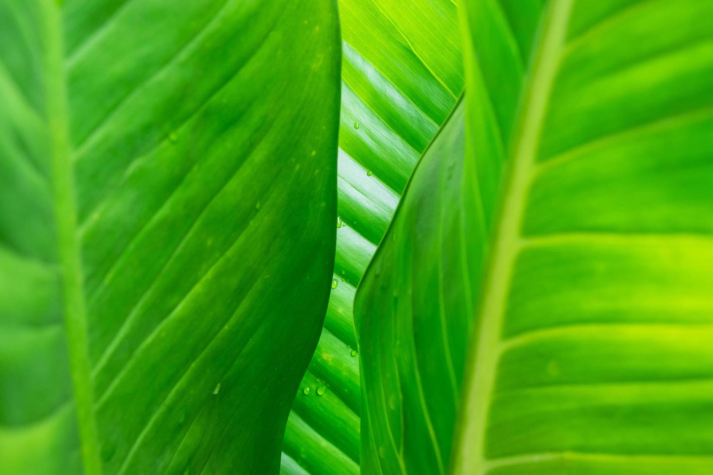 Green leaf background with rain drops photo