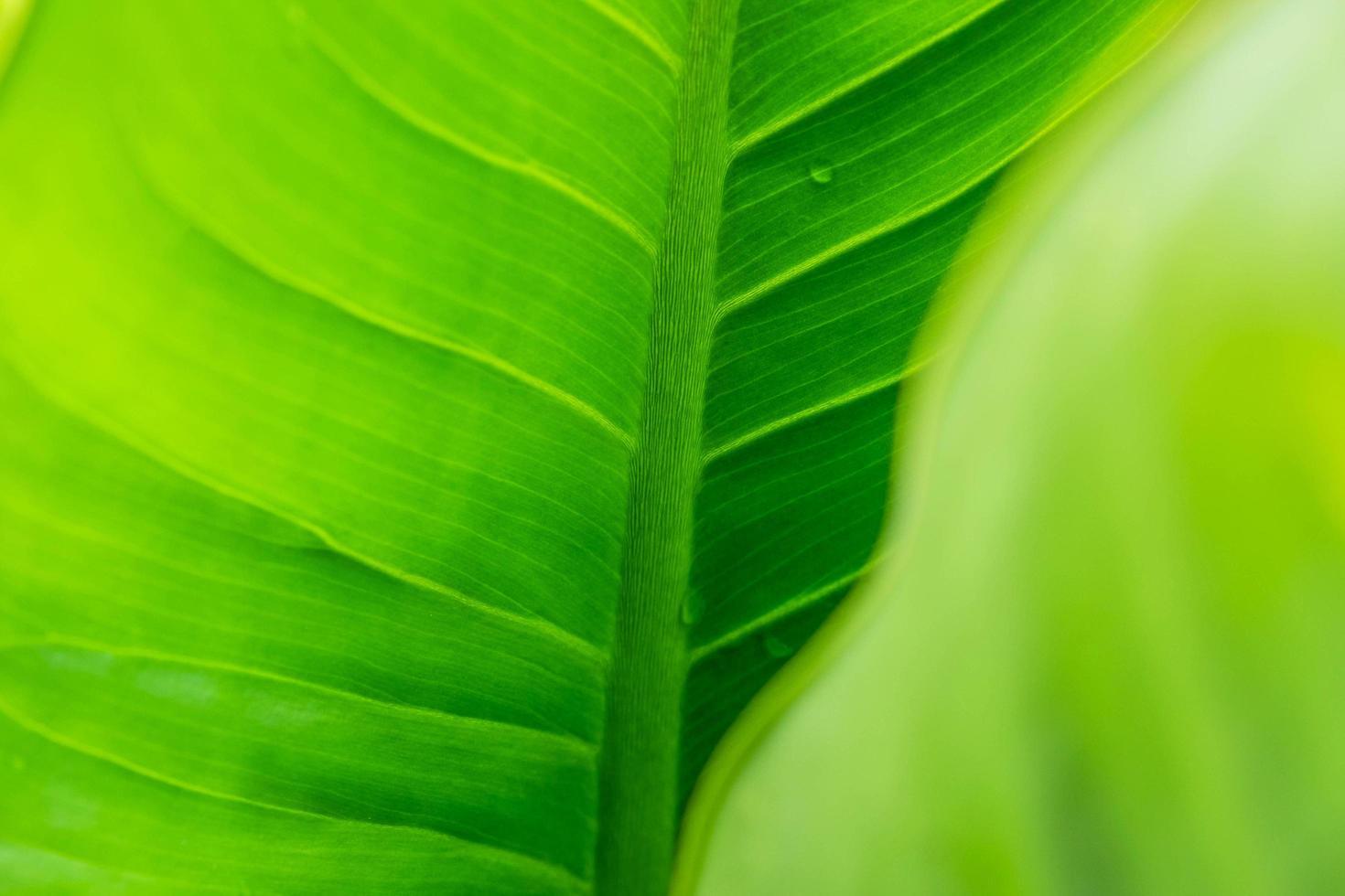groene blad achtergrond met regendruppels foto