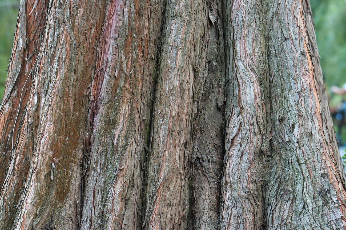 parte do tronco da árvore foto