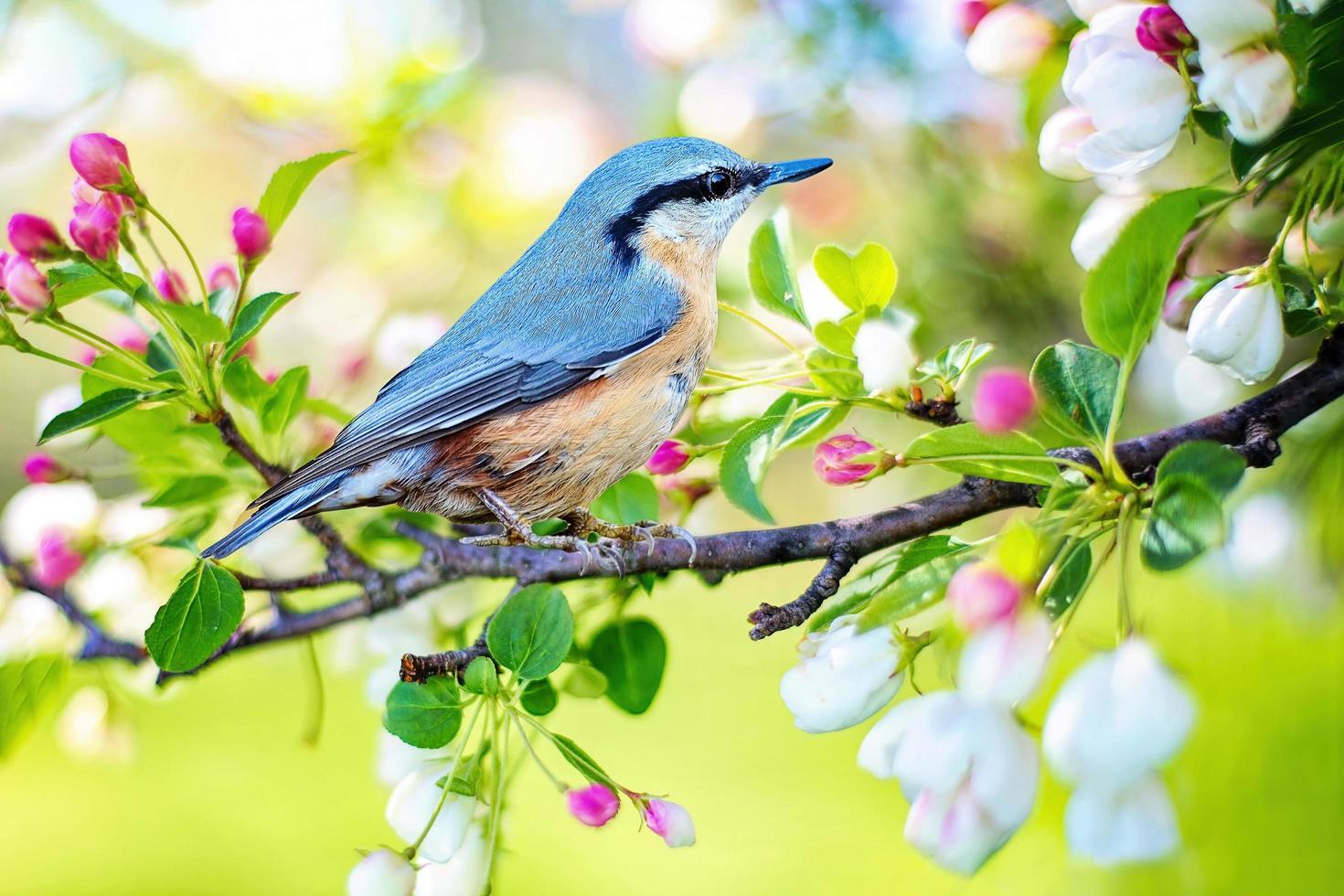 pajarito en ramita de árbol con flores foto