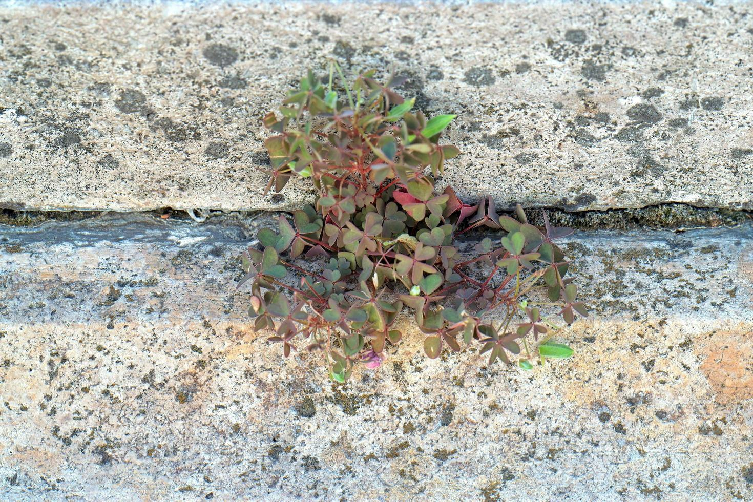Plant grown between stone planks photo