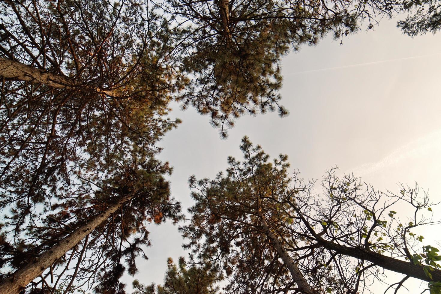 Tree foliage in autumn days photo