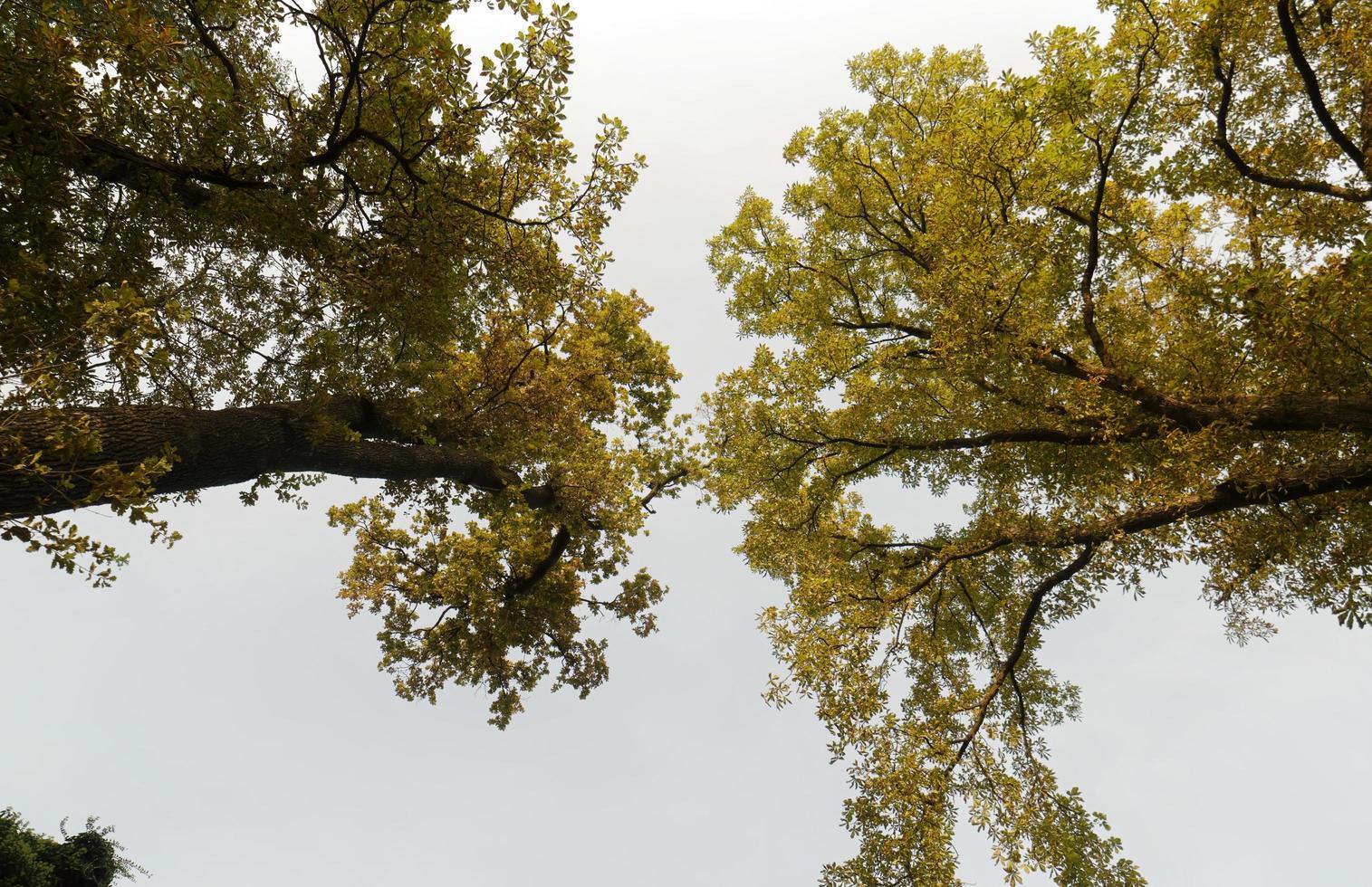 Tree foliage in autumn season photo