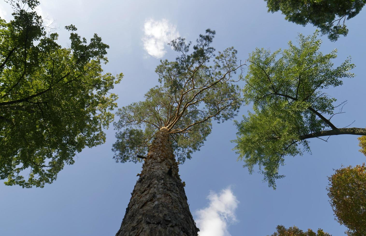 árvores altas em uma floresta foto