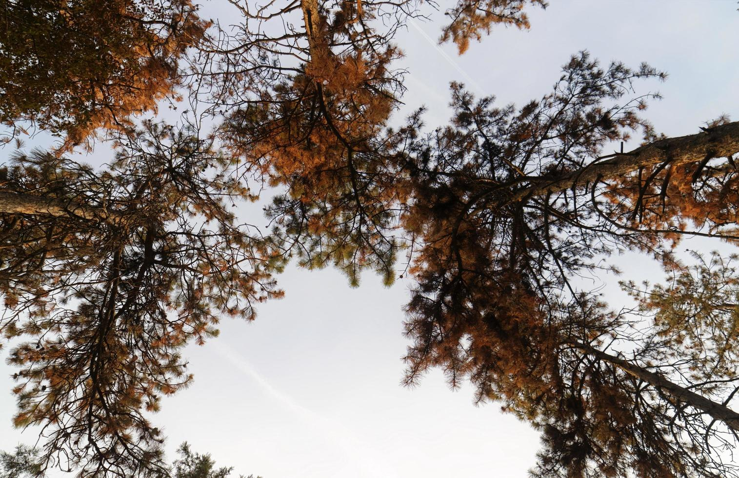 bosbomen in de herfst foto