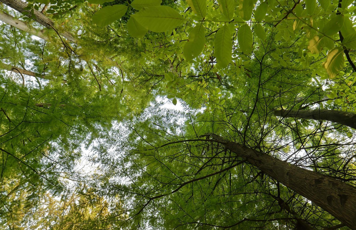 árboles forestales en otoño foto