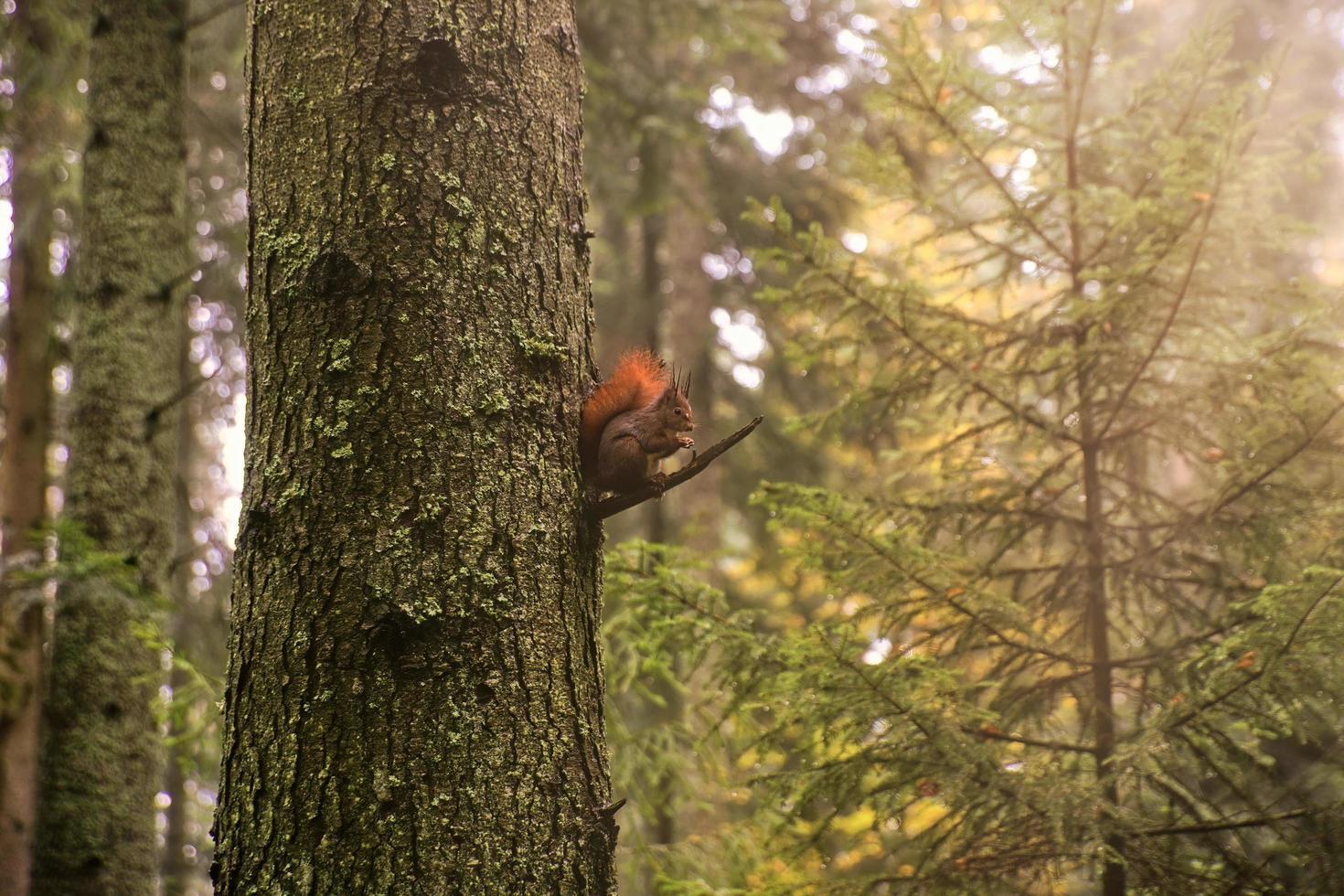 Eichhörnchen auf dem Baum foto