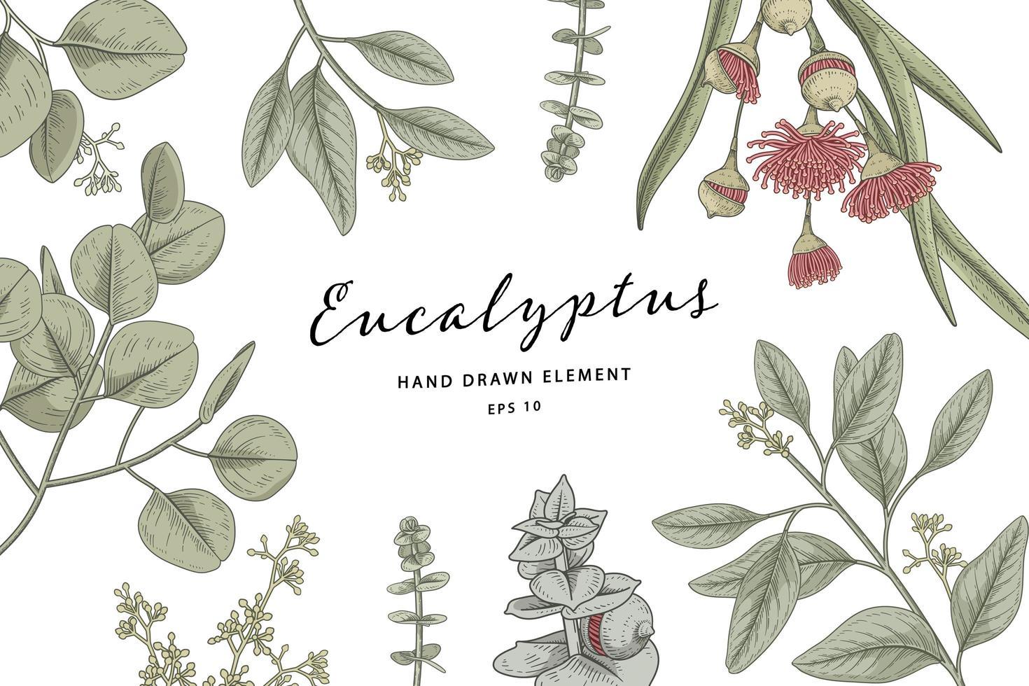 Eucalyptus branch hand drawn botanical set vector