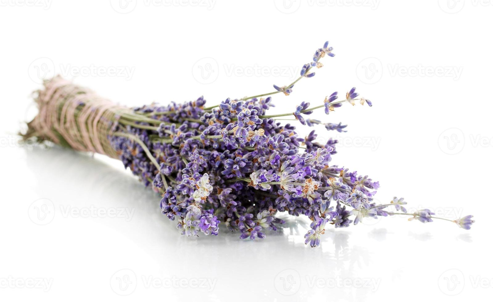 Lavender flowers isolated on white photo