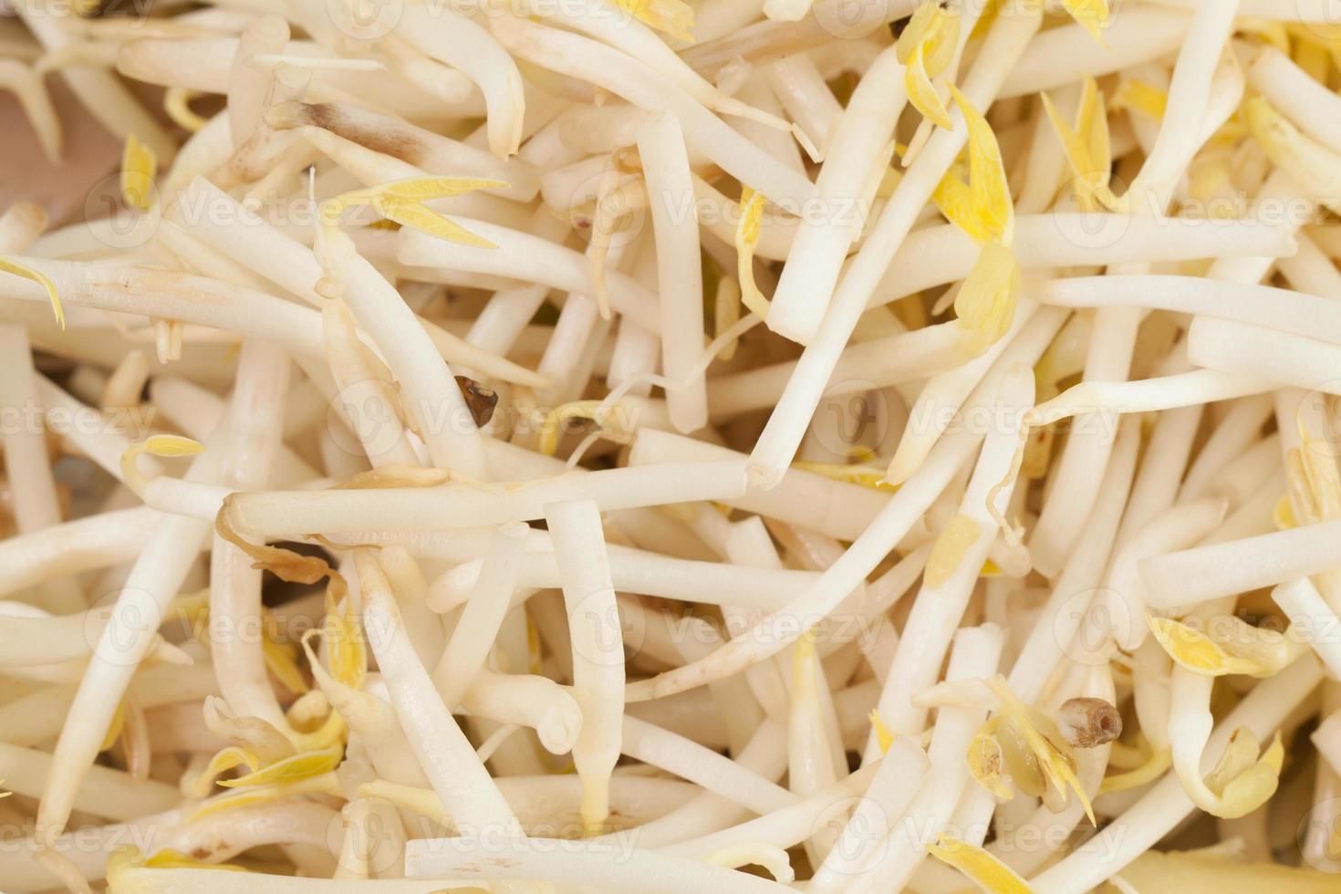 Cerca de brotes de soja foto