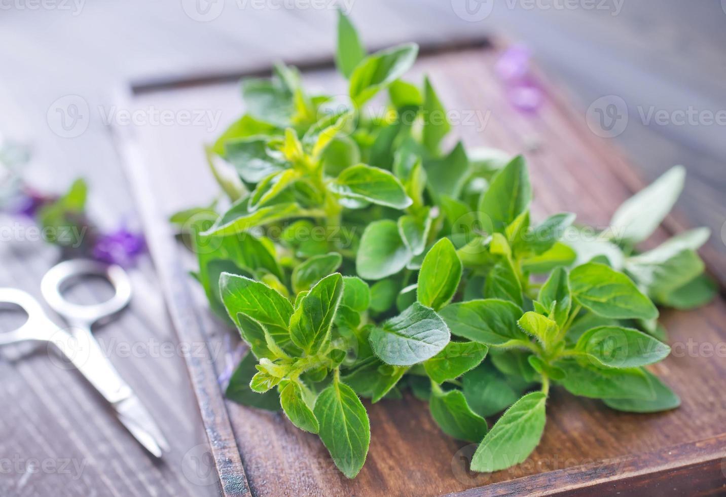 ervas aromáticas foto