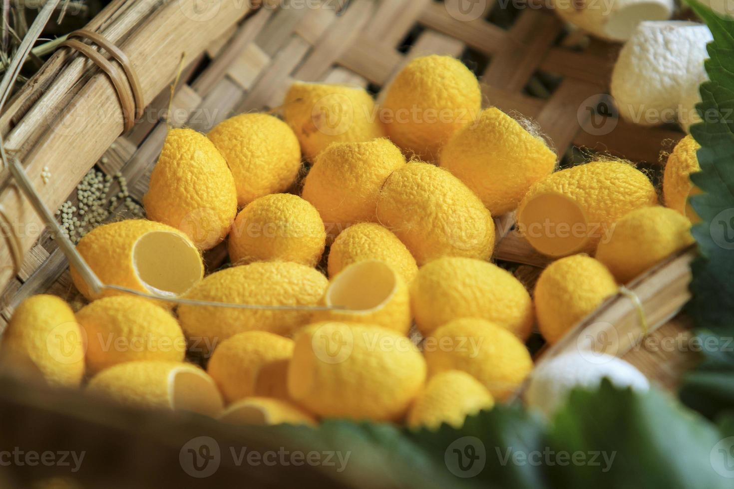gele en witte zijderupscocon gecombineerd in de achtergrond. foto