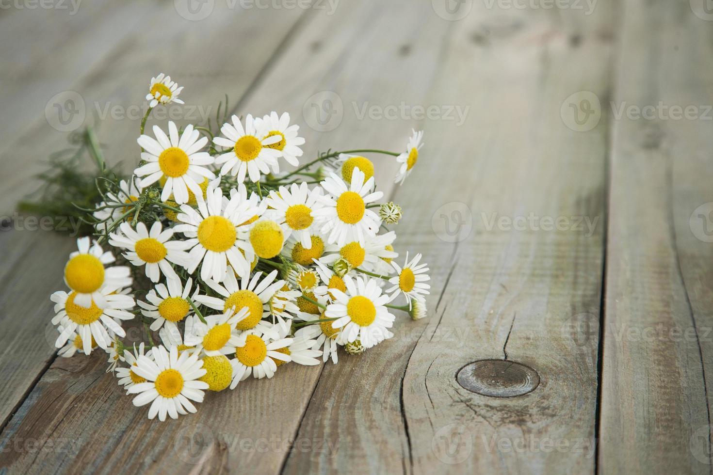 Bouquet d'été de camomille sur le vieux fond en bois gris photo