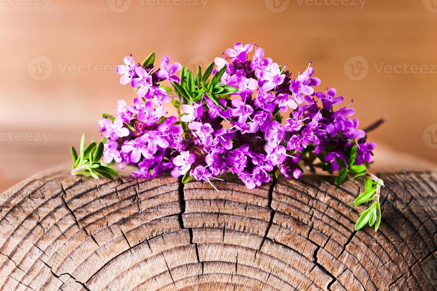 manojo de tomillo floreciente foto