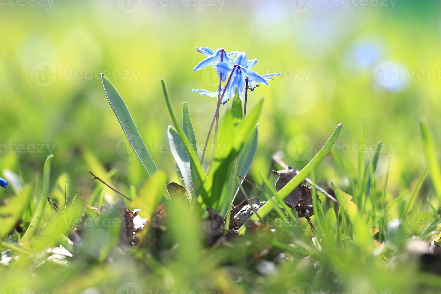 flores silvestres en el campo foto