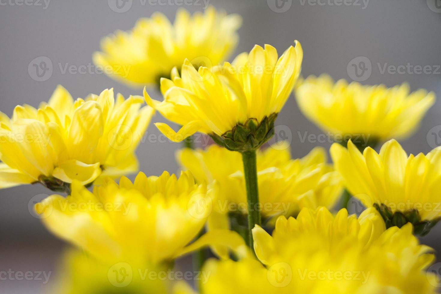 flor en amarillo foto