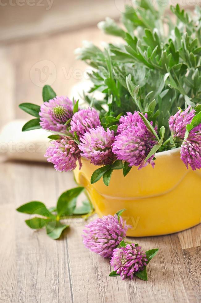 herbal herbs -sagebrush and clover photo