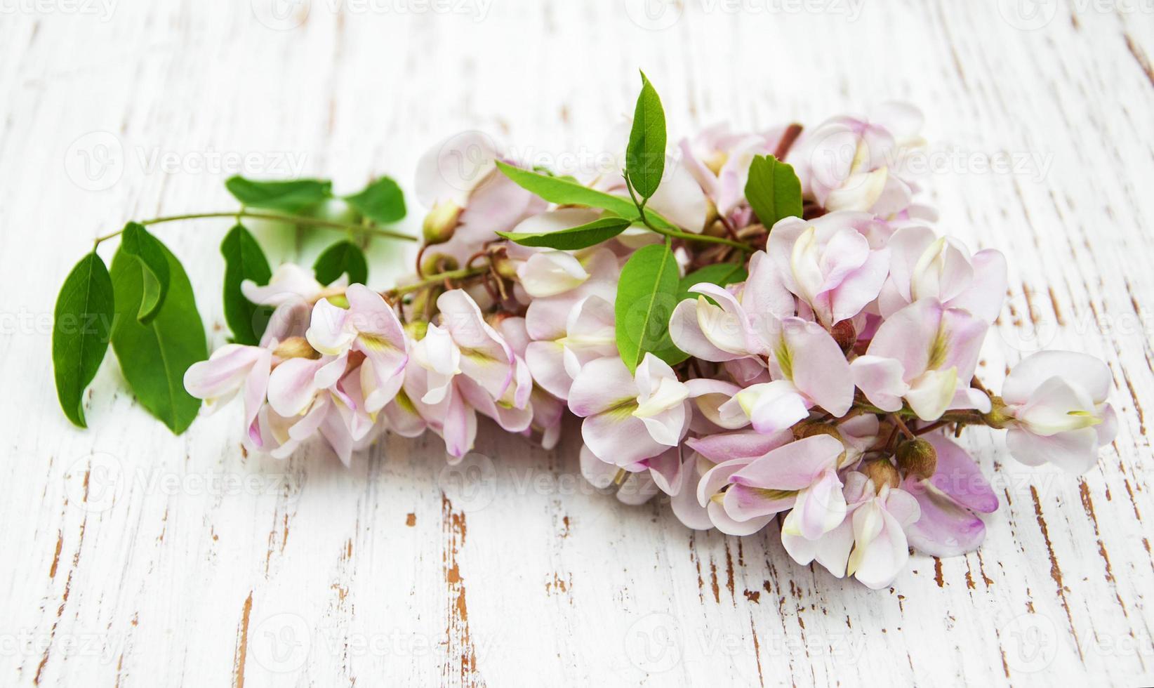 flores de acacia foto