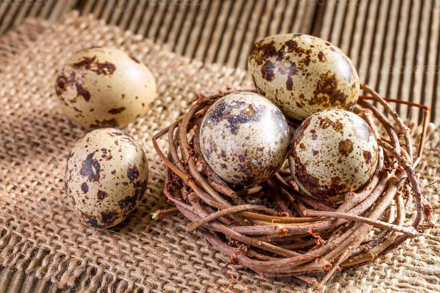 Quail eggs in the nest closeup photo