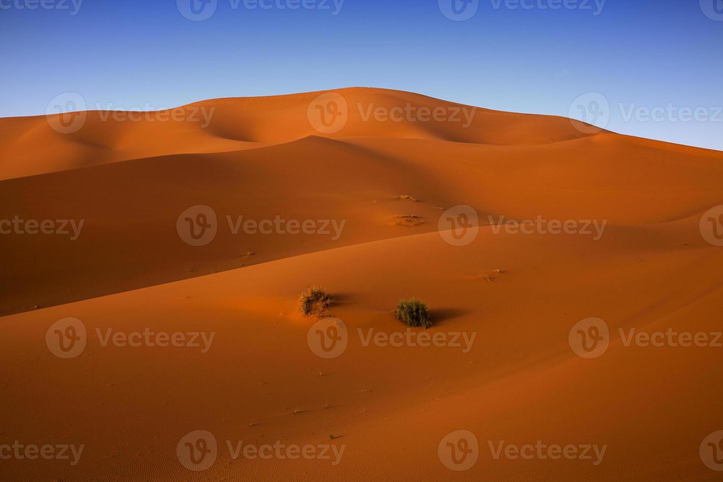 Sahara Desert at sunrise. photo