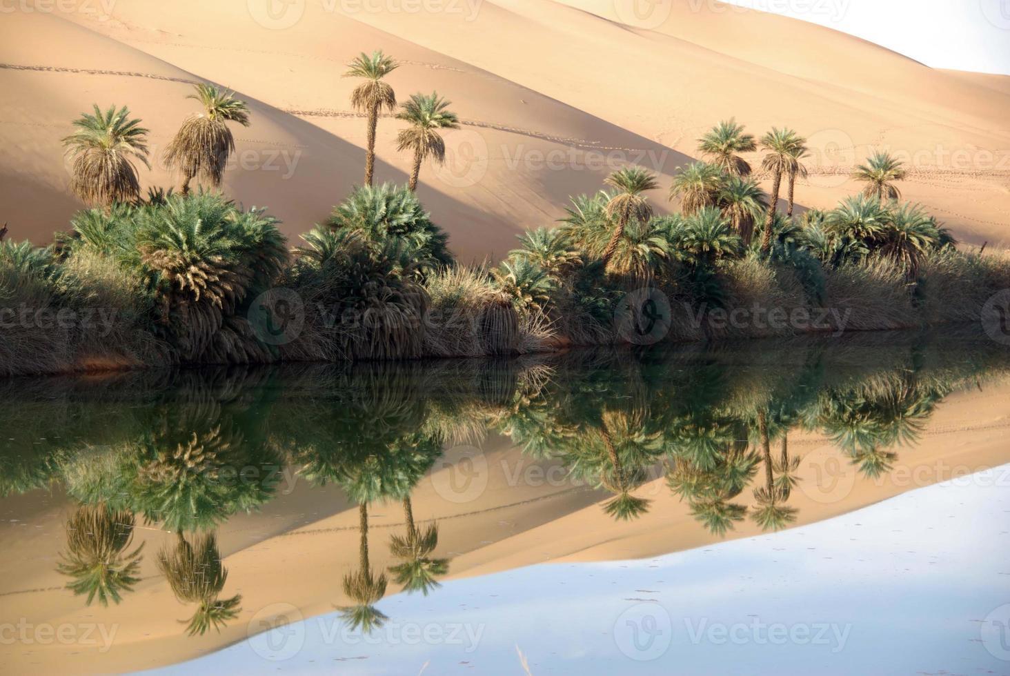 oasis en un desierto en libia con árboles foto