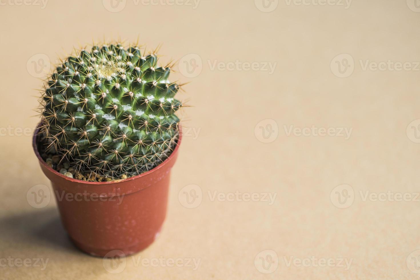 Home furnishings cactus photo