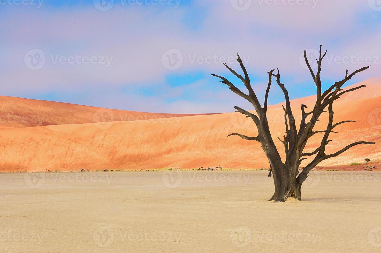 Árboles y paisaje del desierto de Vlei muerto, Namibia foto