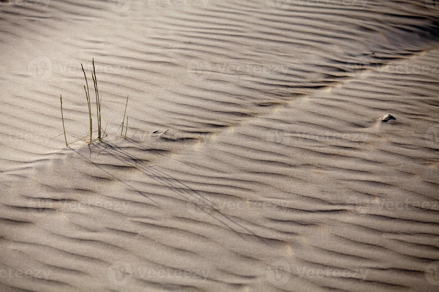 Grass growing from the sand photo